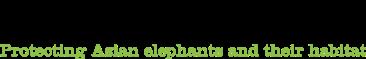 Elephant-Family-Logo-RGB